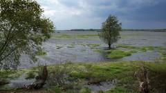 *** (pszcz9) Tags: polska poland przyroda nature natura parknarodowy nationalpark ujściewarty woda water drzewo tree pejzaż landscape beautifulearth sony a77