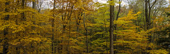 Finally got out for a little fall photography.... (Kevin Povenz Thanks for all the views and comments) Tags: 2018 november kevinpovenz westmichigan michigan ottawa ottawacounty ottawacountyparks grandravinesnorth outside outdoor color fall autumn canon7dmarkii sigma24105art pano panoramic nature trees woods