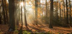 """Autumn Sun"", Netherlands (CvK Photography) Tags: autumn autumncolors canon color cvk europe fall forest landscape nature netherlands outdoor overijssel sunray twente enschede nederland nl"