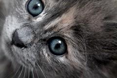 baby moon (sarrajaoui13) Tags: photography cute eyes blue throwback pet moonlight moon baby cat kitten cats