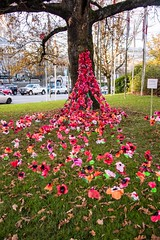 20181111_0136_1 (Bruce McPherson) Tags: brucemcphersonphotography poppyproject shaughnessyschoolpoppyproject shaughnessyelementaryschoolpoppyproject colourful remembranceday memorial creative vancouvercityhall vancouver bc canada