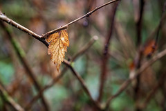The Autumn Is Over (luke.me.up) Tags: nikon z6 nikonz6 2470f4 kitlens leaf autumn fall decay