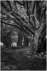 "Exit (""A.S.A."") Tags: infrared830nm trees path gate churchyard britain sonya7rinfrared830nm sonyzeissvariotessarfe1635mmf4 blackwhite mono monochrome greyscale niksoftware silverefex asa2018"