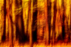 Artistic Fall Forest Swipe 6-0 F LR 11-8-18 J007 (sunspotimages) Tags: tree trees forest fall falltree falltrees fallforest autumn autumntree autumntrees autumnforest nature landscape digitalmanipulation cameramovement swipe cameraswipe fractalius orange orangetree orangetrees orangeforest