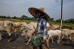 Vaccaro in Orissa (livia.com) Tags: orissa odisha india vacche vaccaro tribe tribù cappello hat