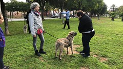 IMG_8600 (Doggy Puppins) Tags: educación canina adiestramiento canino perro dog