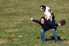 SZP_1352_pslr5 (Lakeside Annie) Tags: 11102018 2018 20181110 24120mm 24120mmf40 70300mm 70300mmf4556 d750 fall huntersville huntersvillenc leannefzaras nc nikkor nikkor24120mmf40 nikkor70300mmf4556 nikkorlens nikon nikond750 northcarolina november10 ruralhill sarazphotography saturday sheepdog sheepherdingtrials dog dogfestival frisbee frisbeedog shepherd trick trickdog
