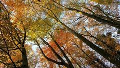 AUTUMN IS BEAUTIFUL & COLORFUL, GO THERE ! (Maarten Kleijkamp) Tags: autumn colorful trees sky sunlight multicolors nature natuur zonlicht bomen lucht kleuren colors herbst rotterdam kralingen netherlands maarten kleijkamp