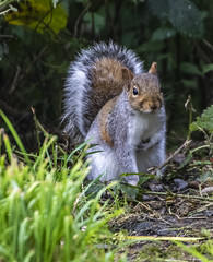 Squirrel (7) (Mal.Durbin Photography) Tags: wildlifephotography maldurbin naturephotography wildbirds forestfarm nature naturereserve
