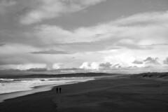 *** (Misha Sokolnikov) Tags: ca california pacificocean beach sky pointreyes monochrome blackandwhite noiretblanc leica leicamonochrom leicamm leicamsystem leicacamera 50mm aposummicron