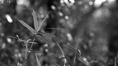 Structure (bamboosage) Tags: takumar 200 35 preset m42