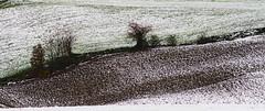 DSC00073 (tommaso.rosi) Tags: neve snow colors winter inverno appennino
