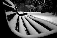 Covered in snow (Dimitri G77) Tags: nikon bench covered snow winter city park blackandwhite monochrome noiretblanc