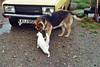 (Chris Hester) Tags: 47 7p northern ireland farmhouse dew dog yellow car sunshine cat