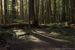 Forest Light 2978 (All h2o) Tags: sun sunlight pacific northwest national forest olympic mountains peninsula nature landscape tree trees path trail wood woods autumn fall season hiking