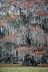 Autumn in the Swamp (Jeremy Duguid) Tags: swamp swamps bayou southern usa south united states travel nature landscape autumn fall foliage cypress jeremy duguid sony kayak boat outdoors