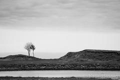 Shaped, Norway (KronaPhoto) Tags: 2018 natur vår bnw bw shaped trees coast seaside weathered værbitt nature norway contrast minimalistic