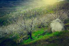 Valdastillas | Valle del Jerte | 2018 (Juan Blanco Photography) Tags: sierradetomantos cerezos cáceres pueblos valledeljerte extremadura españa valdastillas es