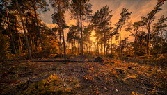 Fiery Forest. (Alex-de-Haas) Tags: 11mm adobe adobelightroom aurorahdr aurorahdr2019 blackstone d850 dutch europa europe european hdr holland irix irix11mm irixblackstone lightroom limburg molenhoek mook mookerheide nederland nederlands netherlands nikon nikond850 skylum autumn beautiful beauty bomen boom bos cirrus cloud clouds colorful colourful fall forest heide herfst landscape landschaft landschap mooi nature natuur park pretty schoonheid sky skyscape sundown sunset tree trees warm wolk wolken woods zonsondergang nl