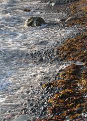 Rocky Shore (peterkelly) Tags: digital canon 6d northamerica canada newfoundlandlabrador cavendish beach shore shoreline coast coastline rocks boulder water trinitybay kelp waves wave