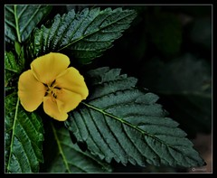'Some days you just have to create your own sunshine.' (Ramalakshmi Rajan) Tags: nikond750 nikon nikkor24120mm flowers flower yellow inmygarden quotes