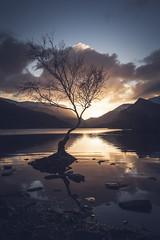 Sunrise at the Lone Tree (kris shaw) Tags: second wales snowdonia anglesey northwales waterfalls mountains travel longexpo seascape sunset sunrise cymru lakes trfan snowdon penmon