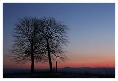 evening glow (Norbert Kaiser) Tags: sachsen saxony liebstadt herbergen aussicht abendlicht abend abendrot sunset sonnenuntergang dämmerung blauestunde bluehour geisingberg bäume trees landschaft landscape natur nature erzgebirge oremountains krušnéhory osterzgebirge dusk