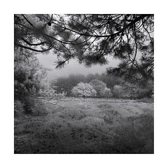 Through the round window (Nick green2012) Tags: square landscape blackandwhite infrared trees silence