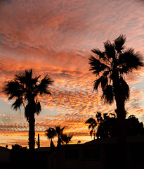 Silhouettes Of Palm Trees (http://fineartamerica.com/profiles/robert-bales.ht) Tags: arizona foothills forupload haybales land palmtree people photo places plants projects states sunsetorsunrise sunrise sunset street southwest red yellow landscape silhouette clouds desert twilight sunrays orange nature beautiful colorful bright scenic stunning mountain morning sensational spectacular cirrus southwestern horizon sonoran panoramic awesome magnificent peaceful surreal sublime magical spiritual inspiring inspirational tranquil sunlight wallpaper yuma robertbales
