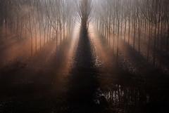 ... (claudiomantova1) Tags: paesaggio pioppi alberi landscape controluce po fiume