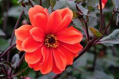 Blume 05 (Sebastian Ukas) Tags: britzergarten fujifilm xh1 xf80mm