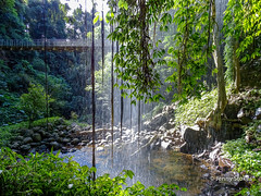 Crystal Shower Falls, Dorrigo, NSW - from behind the falls (Jenny Stokes Melbourne) Tags: waterfll waterfalls water pond river tree trees grass green mist