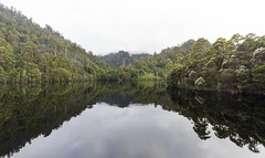 The sound of voices two (Keith Midson) Tags: tullah westcoast tasmania lake mackintosh still calm water trees forest