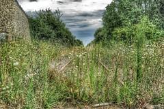 rails--deze-lijn-komt-al-een-tijdje-niet-meer-in-de-spoorboekjes-terug_15246109432_o (zven2) Tags: 2012 frankrijk silos vakantie2012