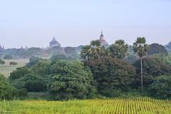 Bagan (Laszlo Horvath.) Tags: nikond7100 sigma1835mmf18art landscape temple bagan myanmar burma