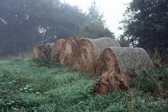 Rolls in fog (Theolde) Tags: leicamp film fuji provia400