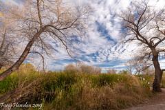 DSC_0622 (farajalhattab) Tags: landscape arizona tucson tamaron nikon d5500 superwide nature bird duck wetland trees sky cloud water