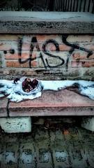 Radishes - Retkek (morosus) Tags: budapestbudapest budapest buda gellérthegy amazing radish retek fekete black szelektiv tag toy last pad bench stone kő wall fal brick tégla snow hó winter tél abstract absztrakt