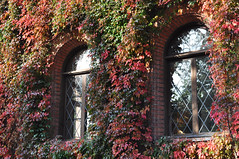 The King's house in autumn colours (DameBoudicca) Tags: sweden sverige schweden suecia suède svezia スウェーデン lund kungshuset königshaus kingshouse lamaisonduroi window fönster fenster fenêtre ventana 窓 autumn fall höst herbst otoño automne autunno 秋