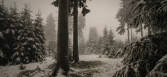 the world of Tomahna (PetschoX5) Tags: freedomstreaming photography canon 700d d´ni atrus catherine yessha tomahna myst cyansworld cyan winter forest whitewinter snow germany fog