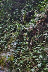_Sochi_Uschele_Agura_2009_07_06 (Бесплатный фотобанк) Tags: gorge krasnodarkrai river russia sochi агура краснодарскийкрай сочи россия ущелье река природа nature гора большойахун