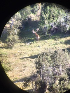 New Zealand Trophy Red Stag Hunting - Kaikoura 6