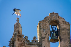 Landing (suzanne~) Tags: church belfry belltower bell stork bird flight landing andalucia andalusia spain puertosantamaria cadiz laiglesiamayorprioral