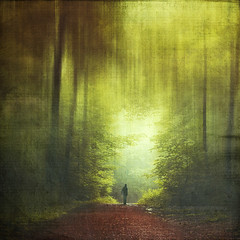 stage (Dyrk.Wyst) Tags: buchenwald germany landschaft natur stimmung wald beechtrees fog forest haze landscape leaves light mist mood morgens morning mystical nature summer sunrise wanderer abstract lush green textures colourcontrast oneperson hazy