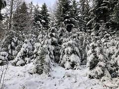 Winter 2019: Bei Adlisberg Arni - Biglen (Martinus VI) Tags: winter winterlandschaft hivers schnee snow nieve neige emmental kanton canton de bern berne berna berner bernese schweiz suisse suiza switzerland svizzera swiss y190112 martinus6 martinus6xy martinus martinusvi