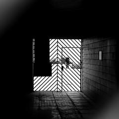 In the square (pascalcolin1) Tags: paris13 homme man carré square lumière light ombre shadow bars barres photoderue streetview urbanarte noiretblanc blackandwhite photopascalcolin 50mm canon50mm canon