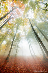 Foggy autumn forest (Mavroudakis Fotis) Tags: forest dreamscape autumn woods trees vivid foliage lush nature rays outdoors path road trunk colorful yellow greece europe destination traveling hikking mountain leaves