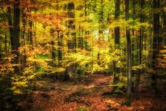 Golden Autumn Delight (Claudia G. Kukulka) Tags: tree baum trees bäume fall autumn herbs foliage laub forest woods wald irtenbergerwald pond teich painterly guttenberger