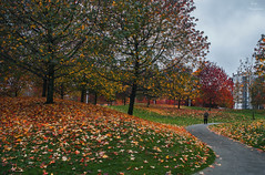 Tarde otoñal en A Coruña... (Leo ☮) Tags: parque park árboles trees hojas leafs otoño autumn fall noviembre november vioño acoruña galicia
