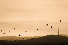 Canberra Balloon Spectacular 2019 (david_john_lee) Tags: canberraballoonspectacular balloons sunrise canberra australia hotairballoon landscape
